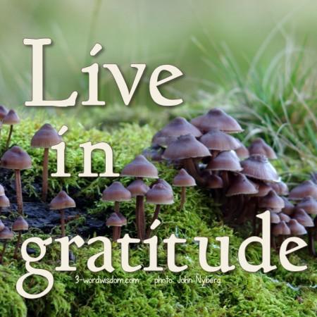 Live in Gratitude