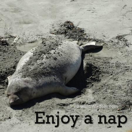 enjoy a nap