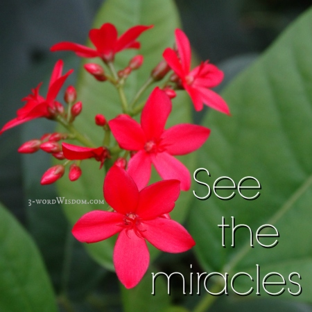 See the Miracles