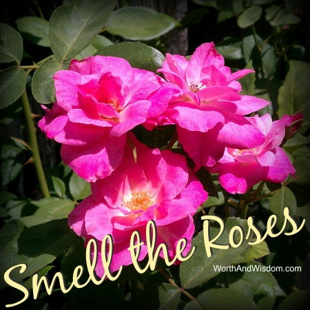 smell the roses 2
