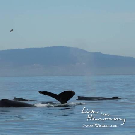 whales- harmony