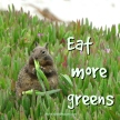 eat more greens